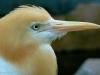 sasha-et-les-oiseaux-003