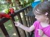 sasha-et-les-oiseaux-006