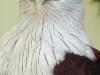 sasha-et-les-oiseaux-010